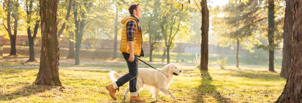 man walking dog banner.jpg
